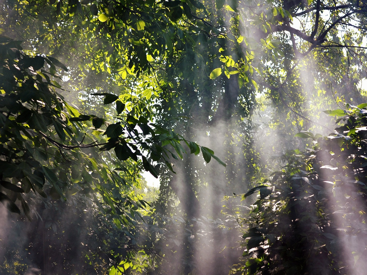 Foggy-Rainforest-1280x960