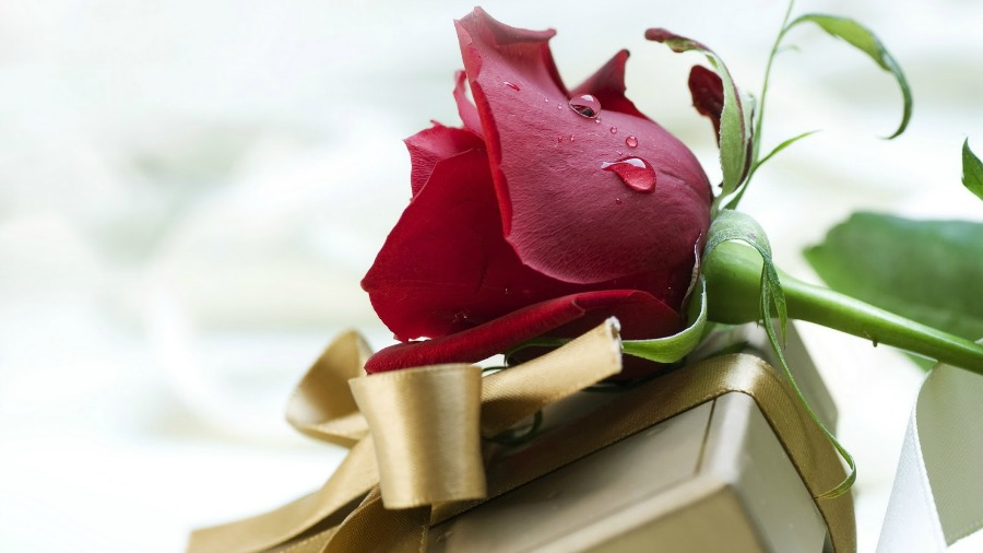 lovers-rose-gift